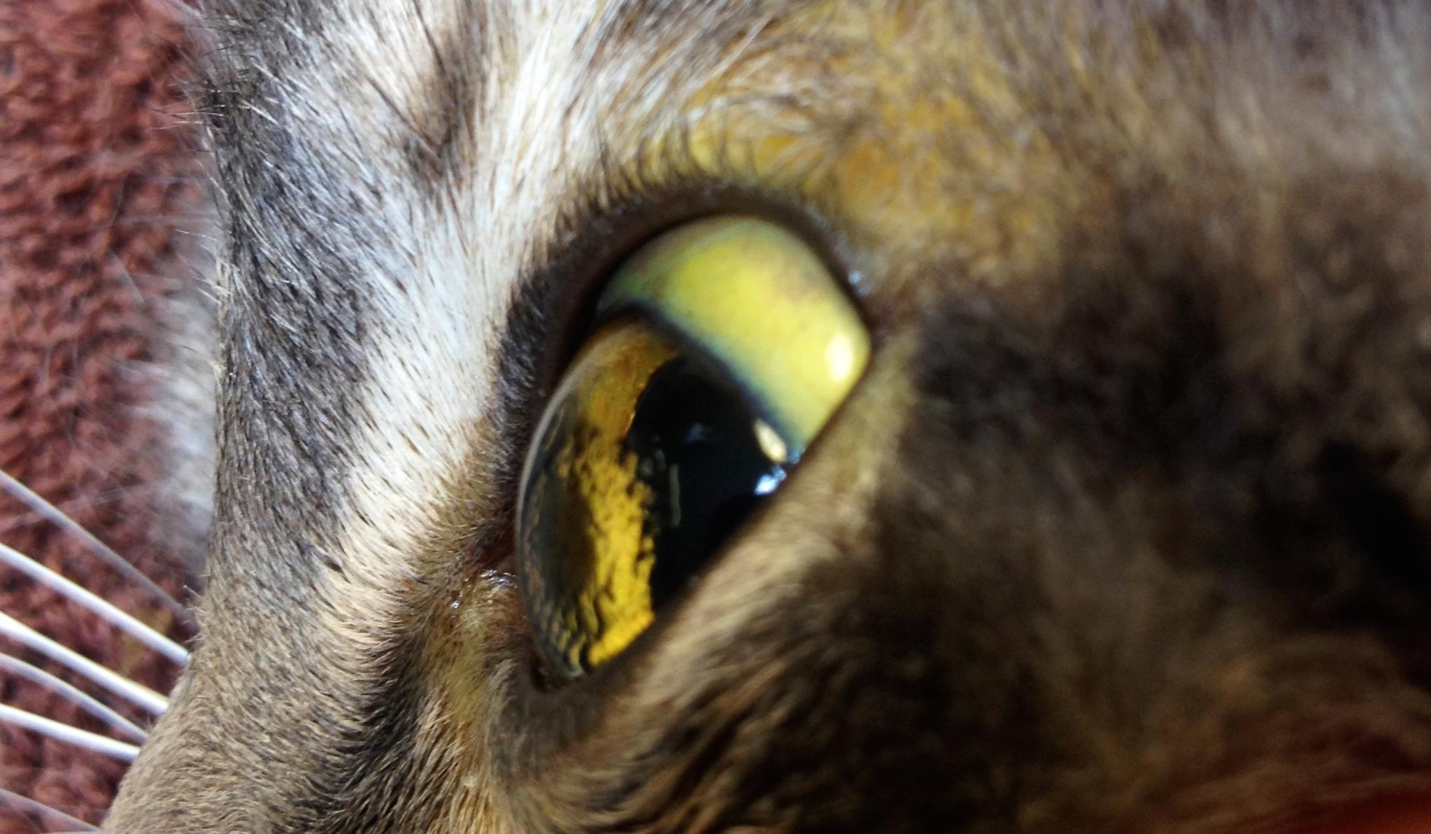 Цирроз у кошки прогноз