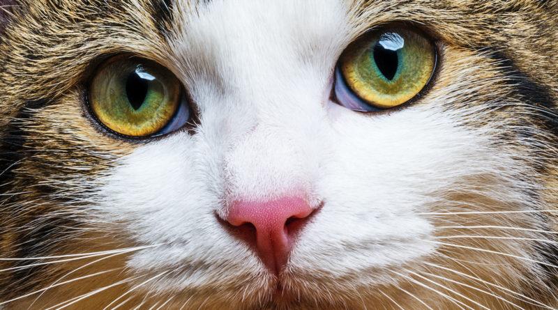 У кошки на глазах белая плёнка