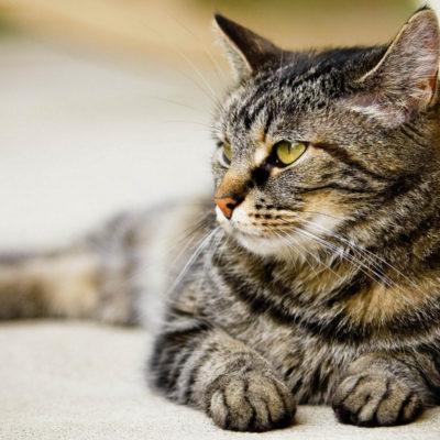 Почечная недостаточность симптомы лечение у кошек: причины болезни, прогнозы, 9 фото, видео