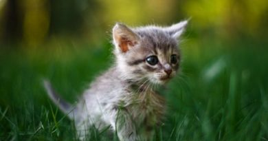 Клички для домашних котов