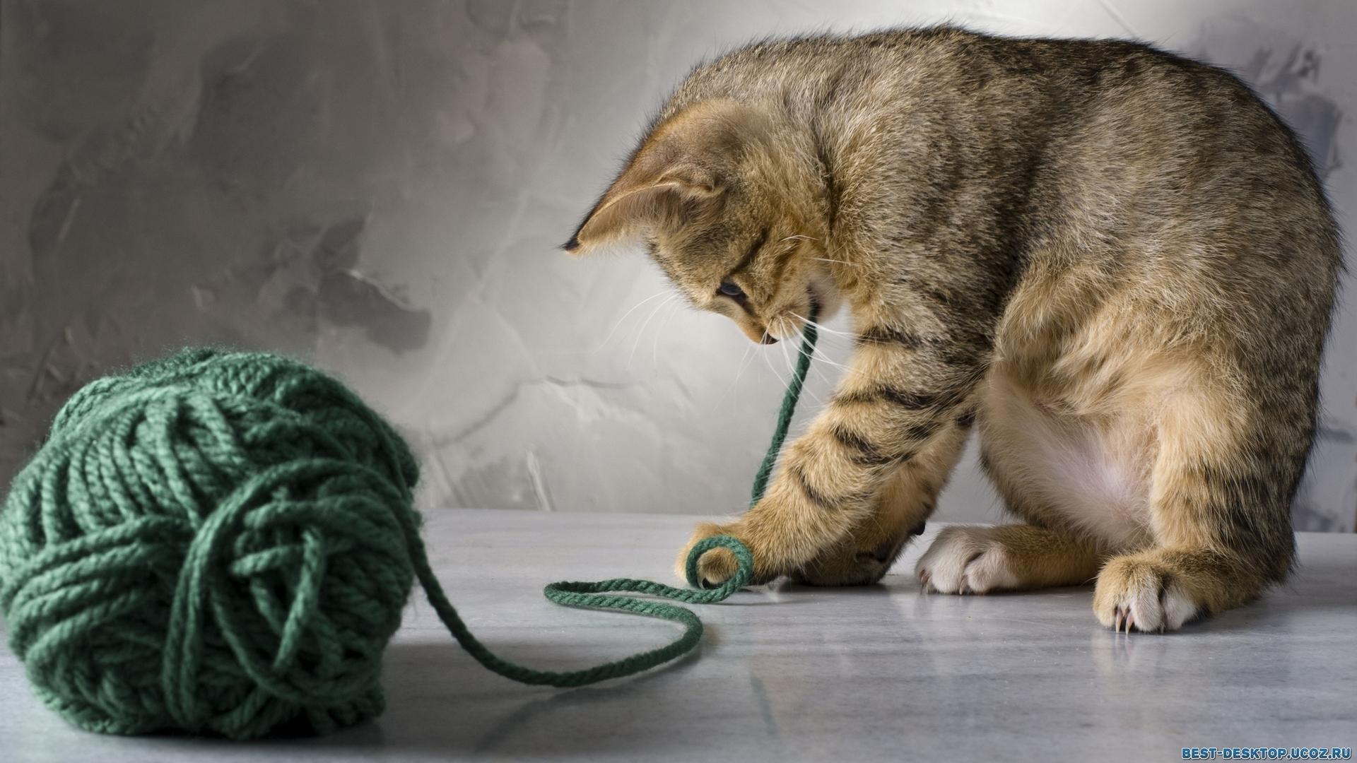 Все особенности правильного содержания и ухода за кошками