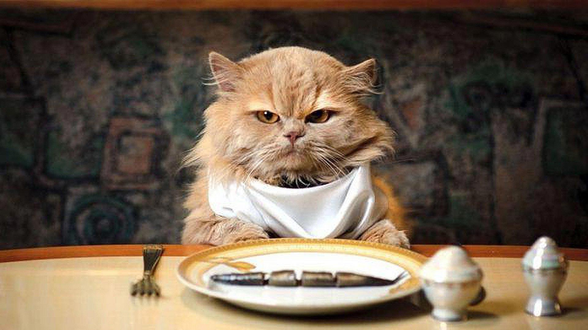 Расскажем чем и как накормить вашего привереду))