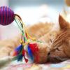 Игрушки для кошек своими руками: 10 идей