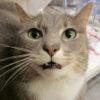 Почему кошка часто дышит?